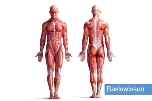 DFAV | Anatomie & Physiologie Basiswissen